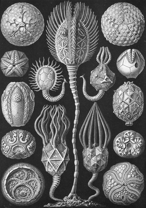 Plate 90 from Haeckel's Kunstformen der Natur, showing a collection of Cystoidea, certain of which bear an uncanny resemblance to monsters from Lovecraft and Giger.